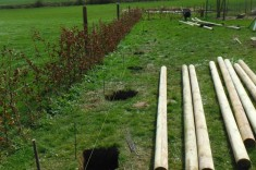 Réalisation arbres à palissades